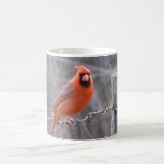Kardinal auf Stacheldraht Kaffeetasse