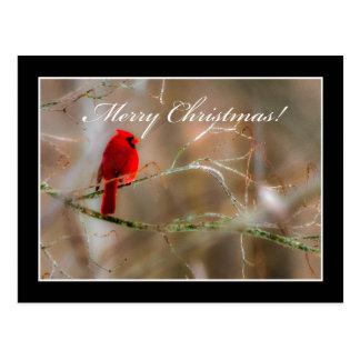 Kardinals-frohe Weihnacht-Postkarte durch Tom Postkarte