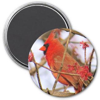 Kardinals-Magnet Runder Magnet 7,6 Cm