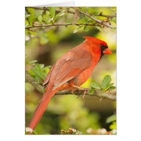 Kardinalsanmerkungskarte Mitteilungskarte