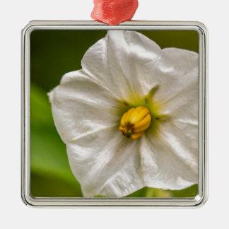 Kartoffelblüte Silbernes Ornament