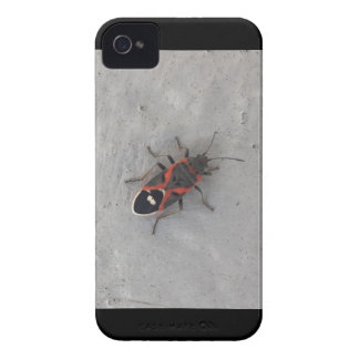 Kasten-Ältest-Käfer iPhone 4 Case-Mate Hülle