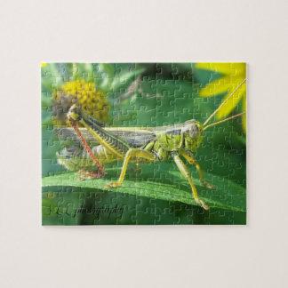 Kasten des Heuschrecken-Fotografie-Puzzlespiels