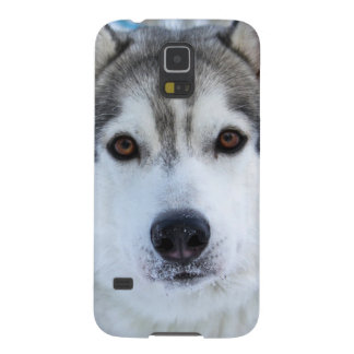 Kasten Wolfgesichts-Fotosamsungs-Galaxie S5 Galaxy S5 Cover