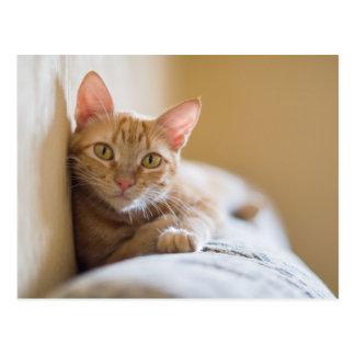 Kätzchen, das auf der Couch liegt Postkarte