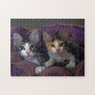 Kätzchen in einem lila Bett