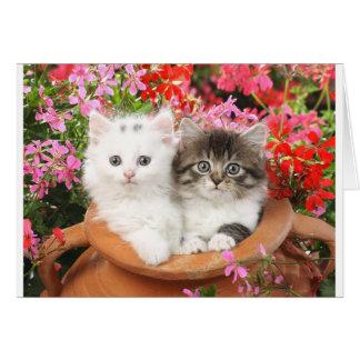 Kätzchen in einem Topf Karte