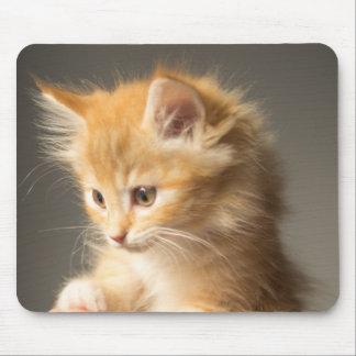 Kätzchen Mousepad