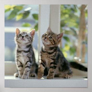 Kätzchen Poster