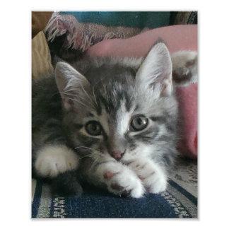 Kätzchen-Yoga Fotodruck