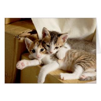 Kätzchen-Zwillings-Dank für Sein mein Freund-Gruß Grußkarte