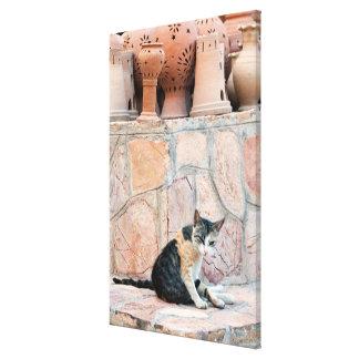 Katze bei Nizwa Souq Leinwanddruck
