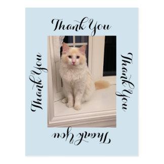 Katze danken Ihnen Postkarte - Blau