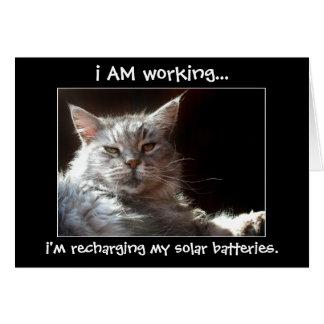 Katze, die in der Sonnenscheinanmerkungs- oder Karte