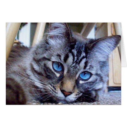 Katze flüstert Bucheinband-Bild Grußkarte