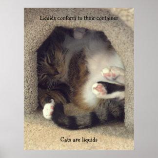 Katze gekräuselt oben im kleinen Raum Poster