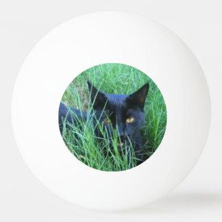 Katze-in-Gras Tischtennis Ball