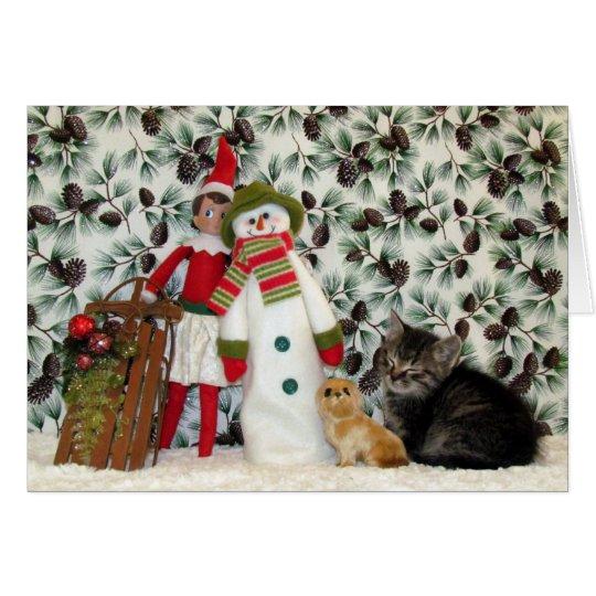 Katze, Kätzchen, Weihnachten, Rettung, Foto Karte