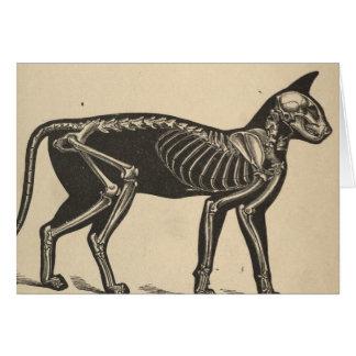 Katze mit dem Skelett Karte