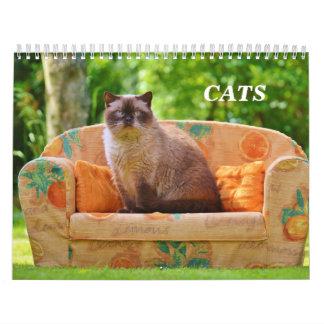 Katzen Abreißkalender