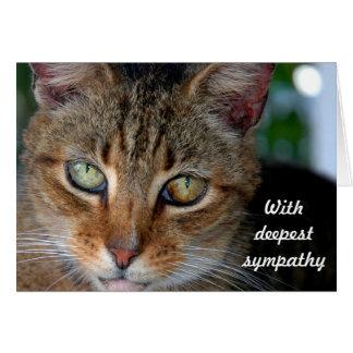 Katzen-Beileid 2 Karte