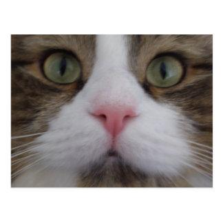Katzen-Gesicht auf Postkarte