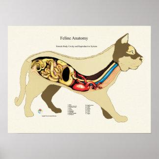 Katzen-internes weibliches poster