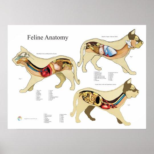 Katzen Organ Anatomie Tierarzt Diagramm Poster