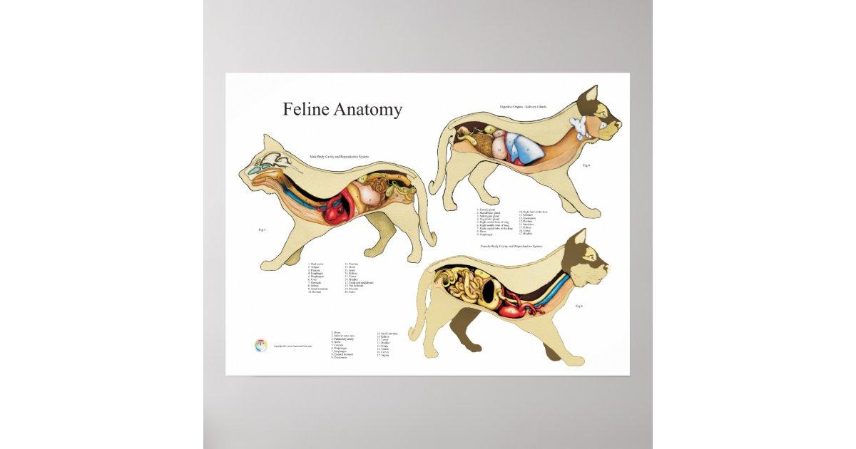 Erfreut Hund Lungen Anatomie Bilder - Anatomie Ideen - finotti.info