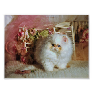 Katzen-Plakat Poster