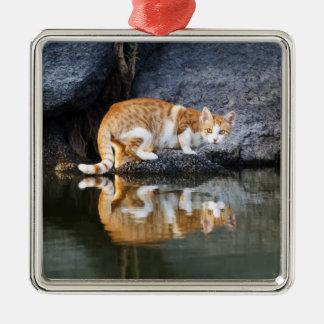 Katzen-Reflexion im Teich-Wasser-Foto - Dekor Quadratisches Silberfarbenes Ornament