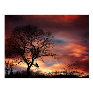 Katzen-Silhouette im Baum am Sonnenuntergang Postkarte