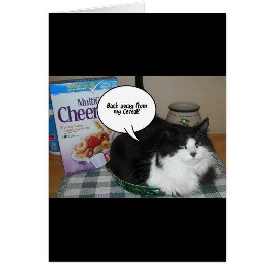 Katzen-Spaß Grußkarte