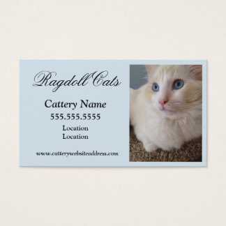 Katzen-Visitenkarten Visitenkarte