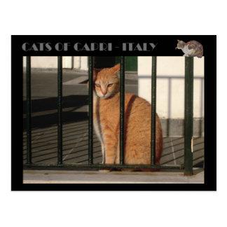 Katzen von Capri, rote orange Tabbykatze - Italien Postkarte