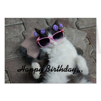 Katzenartiger Diva-Geburtstag Karte