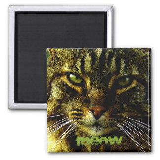 Katzenaugen, die Foto Hypnotizing sind Quadratischer Magnet