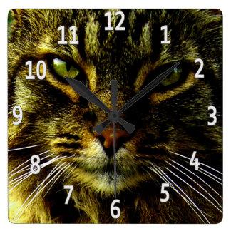 Katzenaugen, die gerahmtes Foto Hypnotizing sind Quadratische Wanduhr