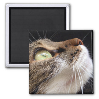 Katzenaugen Quadratischer Magnet
