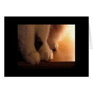 Katzenfüße Karte