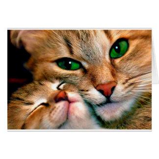 Katzenumarmungen Grußkarte