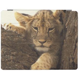 Kenia, Samburu nationale Spiel-Reserve. Löwejunges iPad Hülle