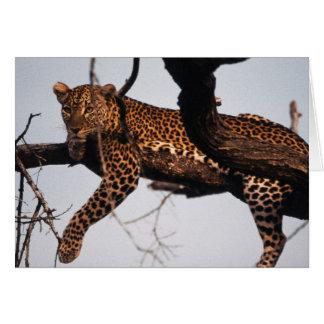 Kenia, Samburu Spiel-Reserve Kenia, Leopard Karte