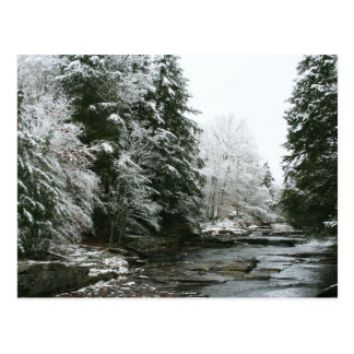 Kiefer-Weihnachtspostkarte Postkarte