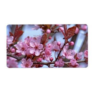 Kirschblüte Asien