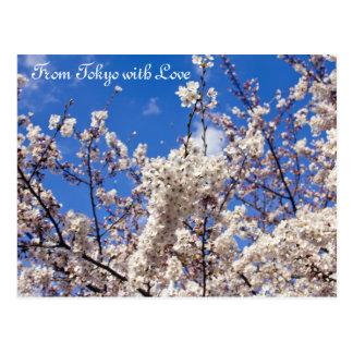 Kirschblüte-Kirschblüten-weißer blauer Himmel Postkarte