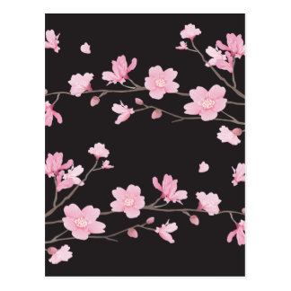 Kirschblüte - Schwarzes Postkarte