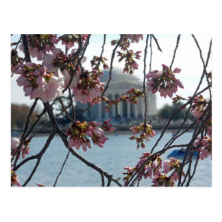 Kirschblüteerinnerungsfest Jeffersons nationaler Postkarte