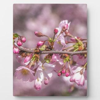 Kirschblüten Fotoplatte