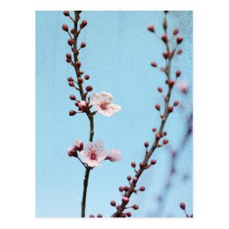 Kirschblüten-Himmel Postkarte